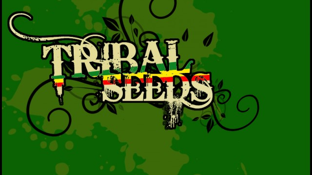 Tribal Seeds – Mad Man – Official Sound HQ